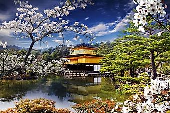 Цветущая сакура у храма (Каталог номер: 18133)