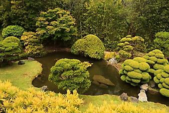 Японский чайный сад, Сан-Франциско (Каталог номер: 18137)