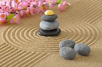 Орхидея и камни на песке (Каталог номер: 18139)