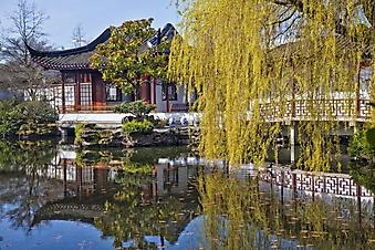 Ива в японском саду (Каталог номер: 18147)