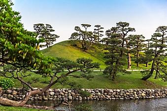 Рассвет в японском саде (Каталог номер: 18150)