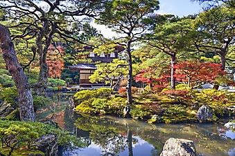Японская осень (Каталог номер: 18153)
