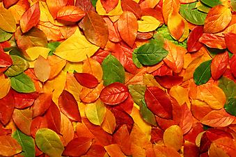 Опавшие осенние листья. (Код изображения: 22004)