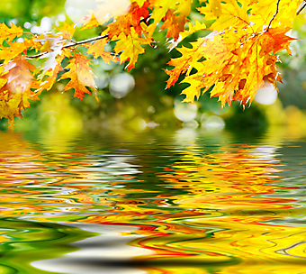 Красочные осенние листья. (Код изображения: 22019)