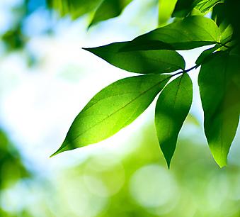 Зеленые листья. (Код изображения: 22020)