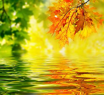 Красочные осенние листья. (Код изображения: 22021)