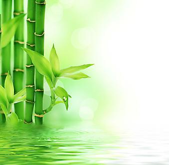 Бамбук. (Код изображения: 22023)
