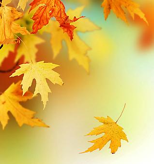 Осень. (Код изображения: 22038)