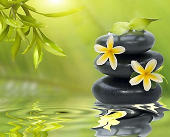 Цветы и камни на зеленом фоне (Каталог номер: 22045)