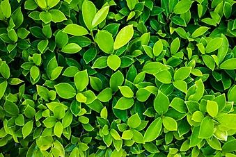 Зеленый фон из весенней листвы (Каталог номер: 22056)