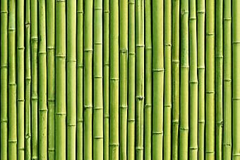 Фон из зеленого бамбука (Каталог номер: 22059)
