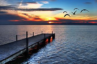 Чайки над морем. (Код изображения: 04006)