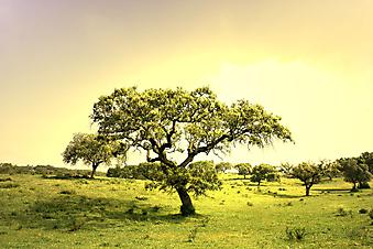 Пейзаж с деревьями на закате. (Код изображения: 04020)