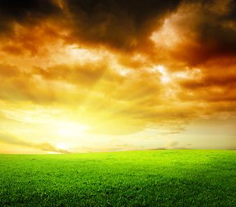 Закат в поле. (Код изображения: 04035)
