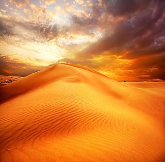 Пустыня. (Код изображения: 04046)