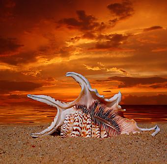 Раковина на пляже. (Код изображения: 04047)
