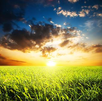 Рассвет в поле. (Код изображения: 04048)