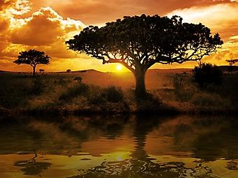 Африканский закат (Каталог номер: 04088)