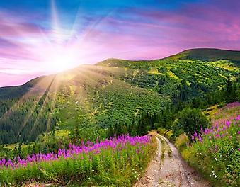 Розовый рассвет над горами (Каталог номер: 04090)