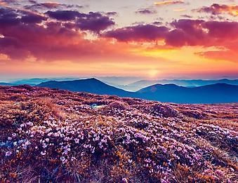 Закат над горным лугом (Каталог номер: 04096)