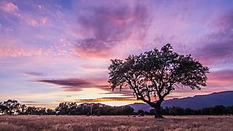Закат над саванной (Каталог номер: 04099)