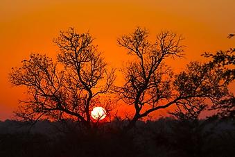 Силуэт кроны на фоне солнца (Каталог номер: 04102)
