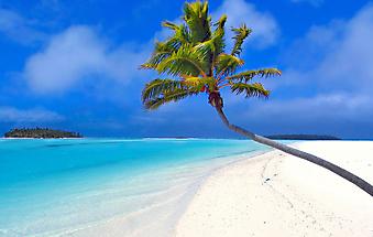 Пальма на пляже. (Код изображения: 05003)
