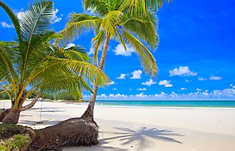 Пальмы и пляж. (Код изображения: 05004)