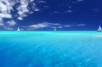 Парусники в море. (Код изображения: 05006)