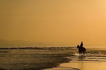 Конная прогулка на закате. (Код изображения: 05010)