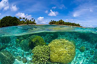 Коралловый риф. (Код изображения: 05011)