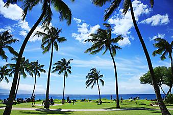 Тропический пляж на Гавайях. (Код изображения: 05025)