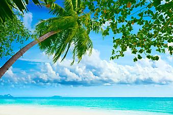 Красивый тропический пляж. (Код изображения: 05042)