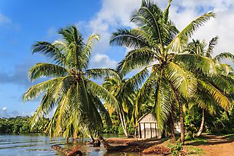 Тропический пейзаж, Мадагаскар. (Код изображения: 05048)