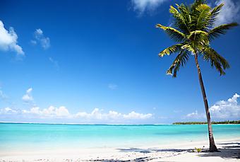 Океан и пальмы. (Код изображения: 05052)