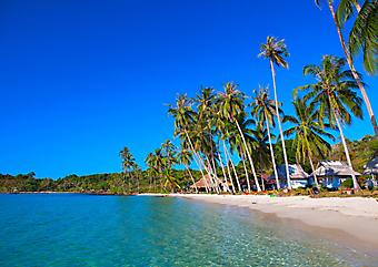 Кокосовые пальмы и бирюзовый океан. (Код изображения: 05056)