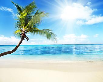 Пальма и пляж. (Код изображения: 05069)