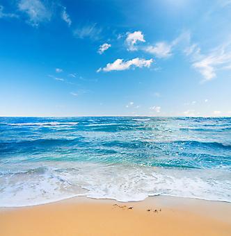 Пляж и море. (Код изображения: 05077)