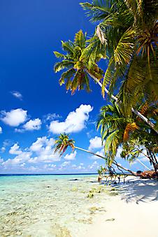 Тропический пляж. (Код изображения: 05083)