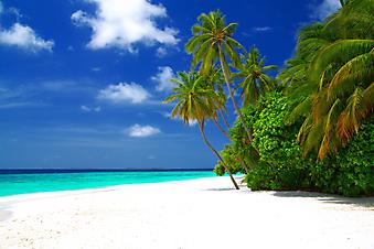 Пляж с белым песком. Мальдивы (Каталог №: 05088)