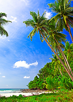 Заброшенный пляж с пальмами. (Код изображения: 05096)
