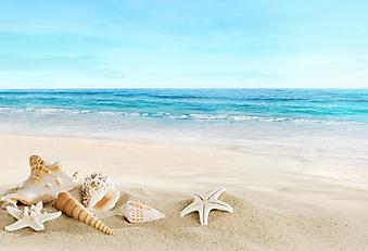 Сокровища океана на берегу. (Код изображения: 05100)