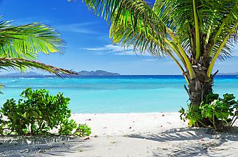 Пальмы и красочное море. (Код изображения: 05109)