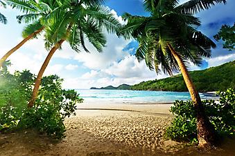 Пальмы, море и пляж. (Каталог номер: 05110)