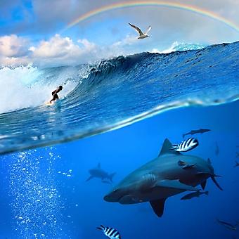 Удовольствия и опасности океана (Каталог номер: 05117)