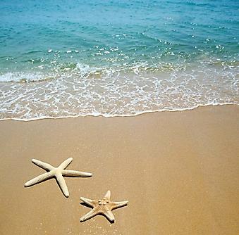 Звезды на морском песке (Каталог номер: 05121)