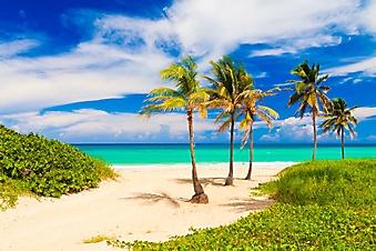 Пальмы на кубинском пляже (Каталог номер: 05127)