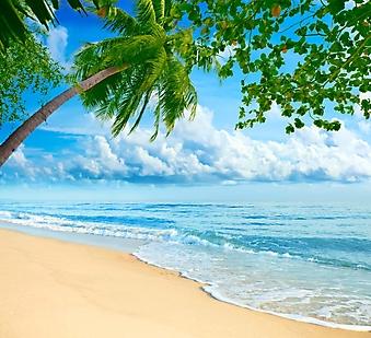 Пальмы над бирюзовым морем (Каталог номер: 05130)