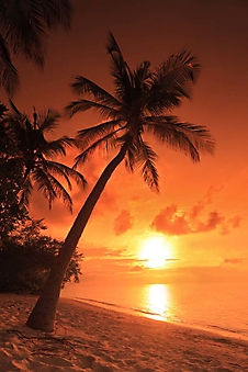Закат над морем, Мальдивы (Каталог номер: 05131)