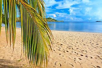 Ветка кокосовой пальмы на пляже (Каталог номер: 05132)
